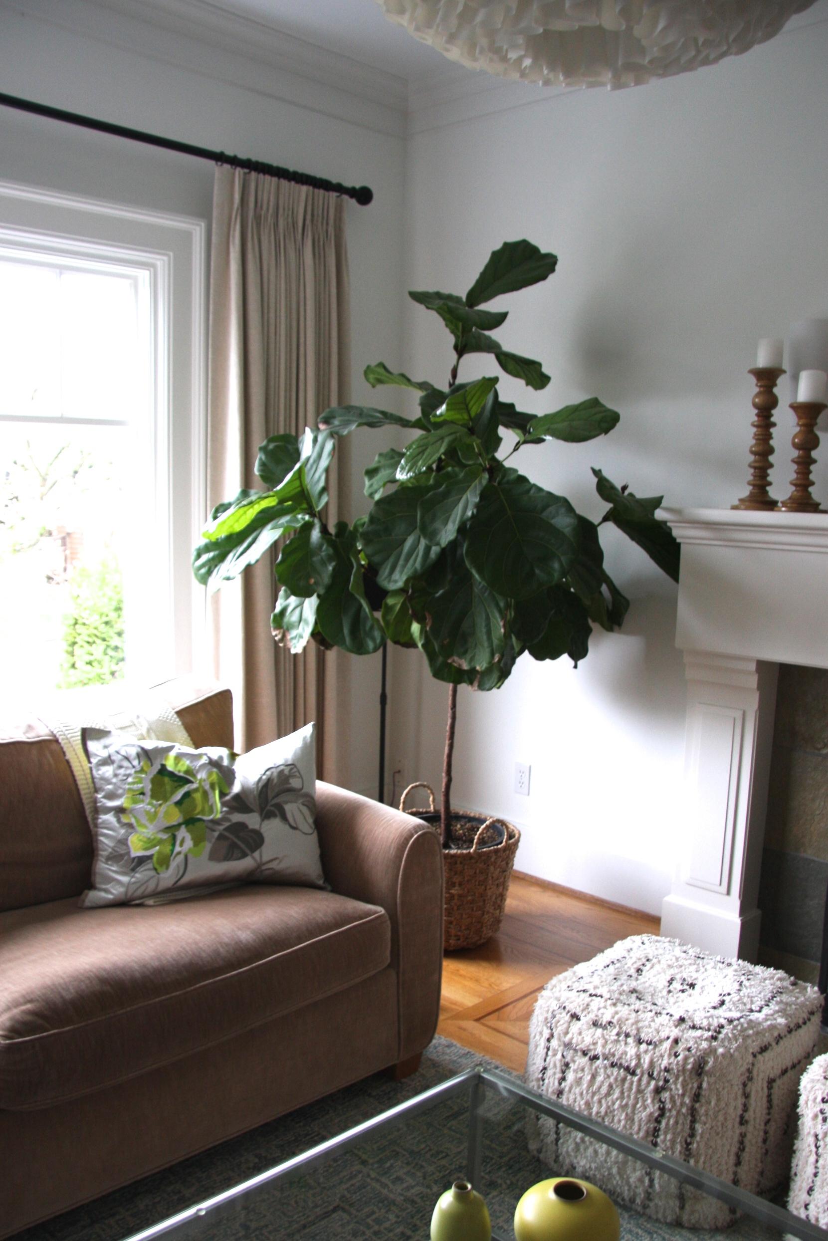 Pleated living room drapes
