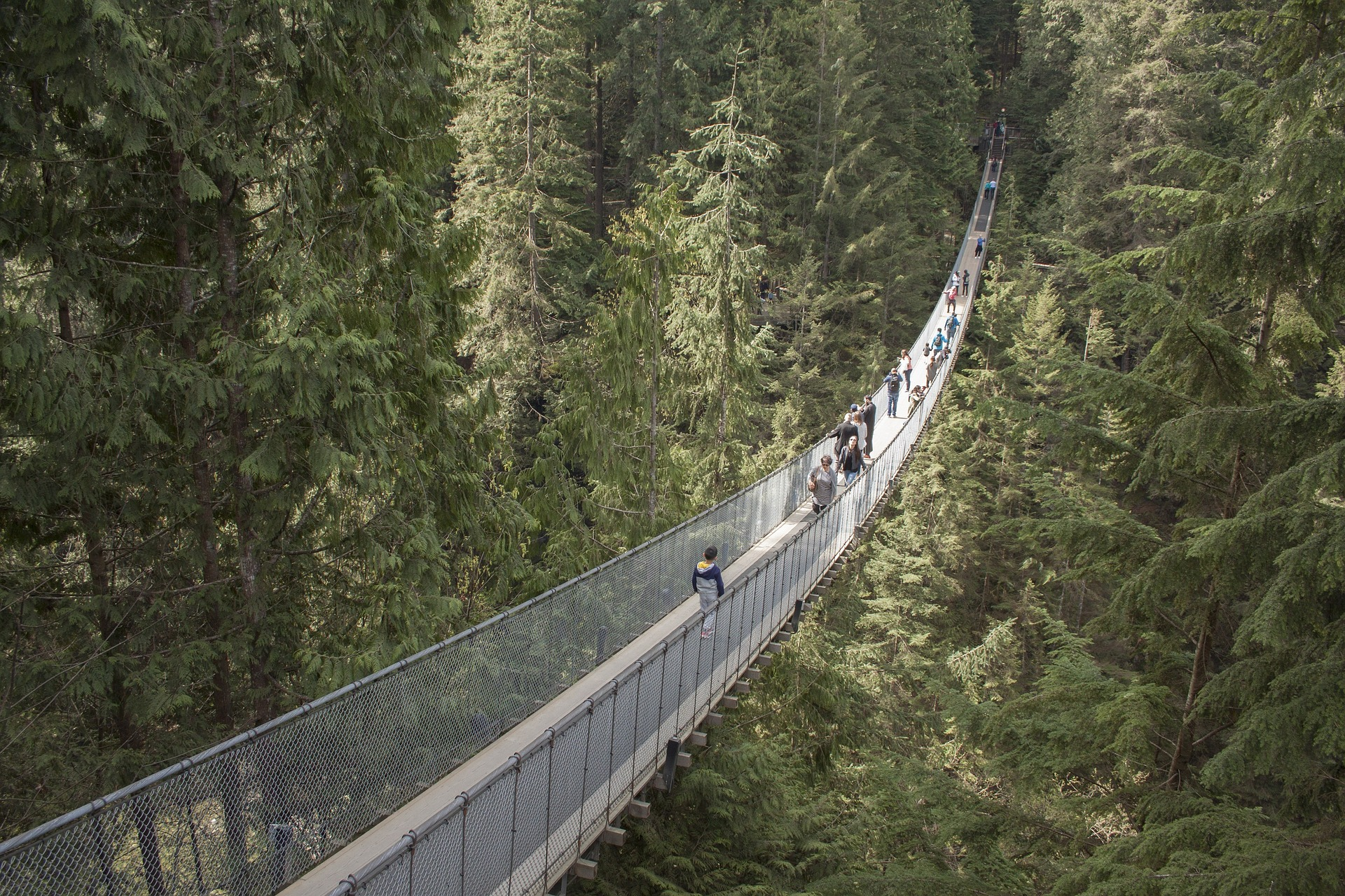 What to do in Vancouver: Cross the Capilano Suspension Bridge