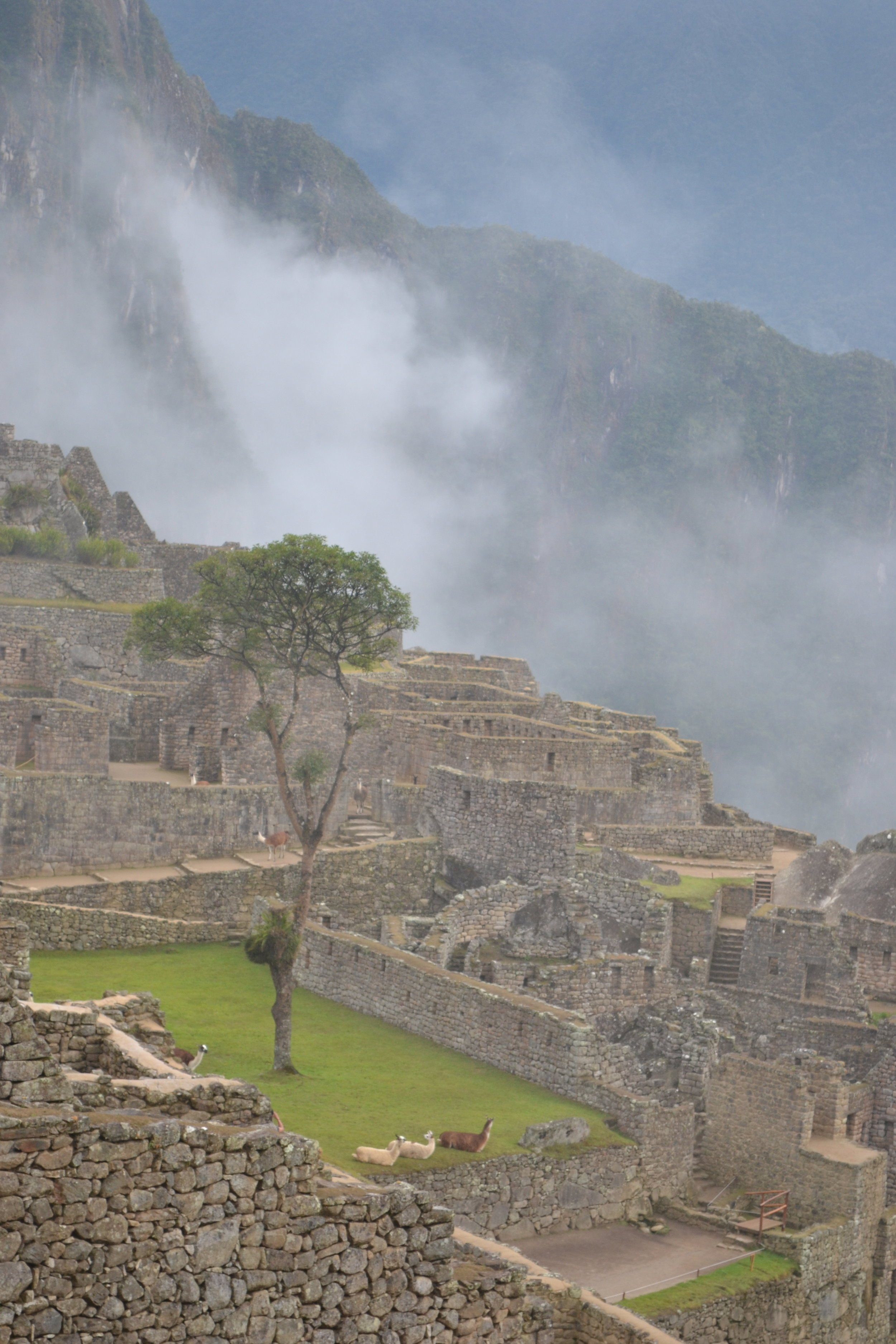 One of my favorite Pictures from Machu Picchu!