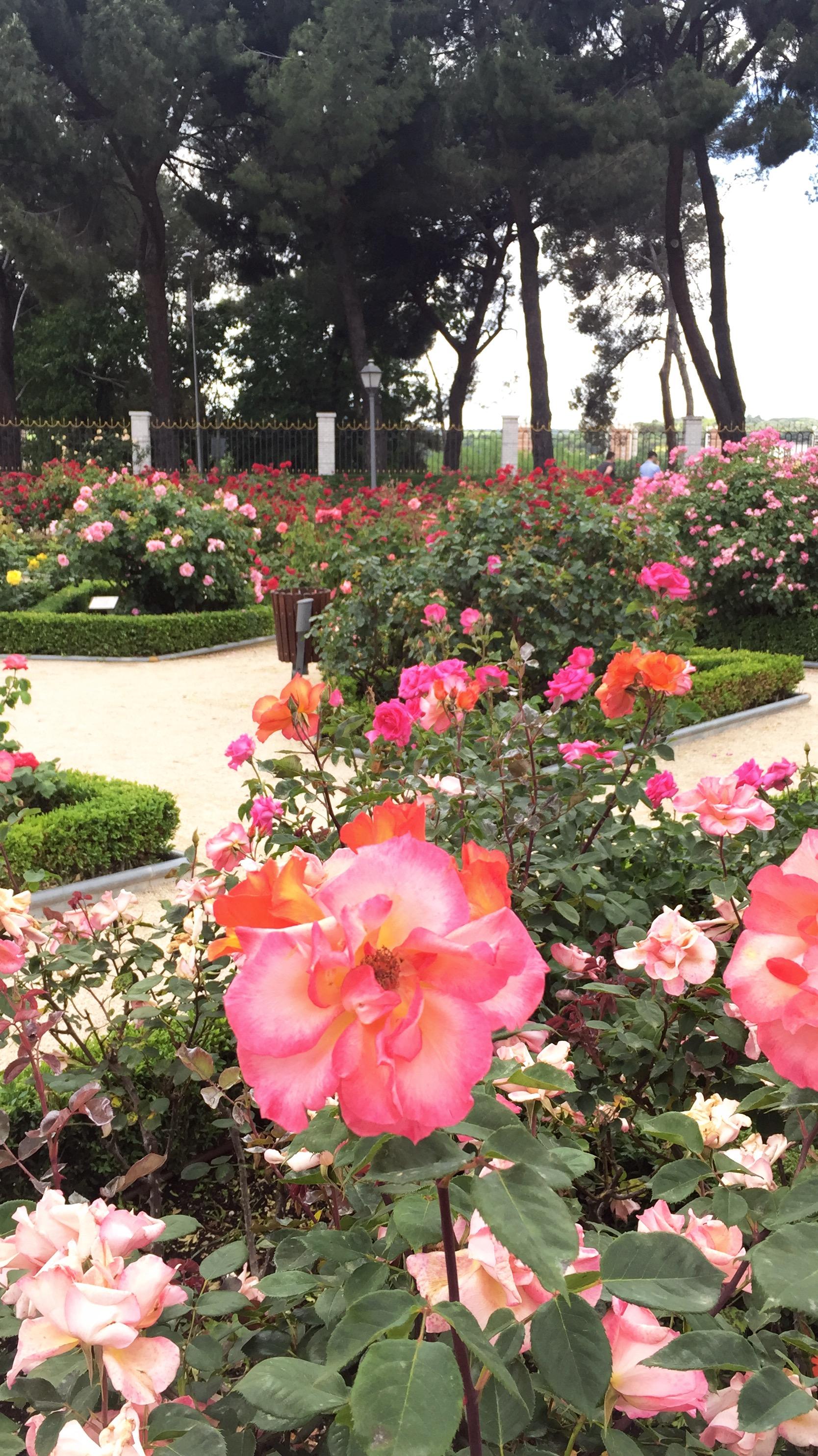 Rose Garden in Madrid