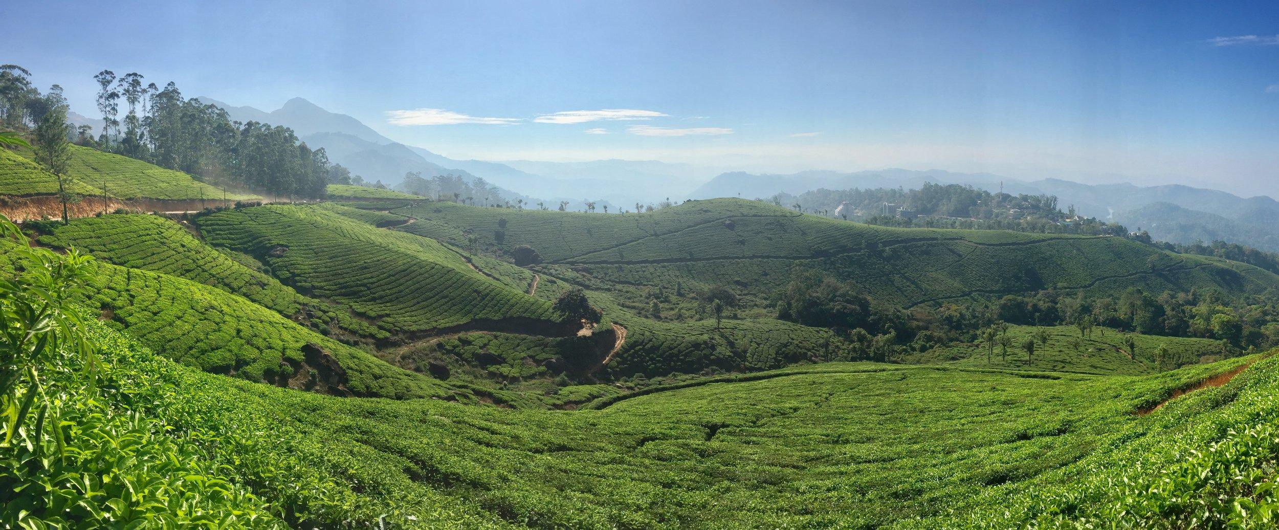 Tea plantations of Munnar, Kerala.