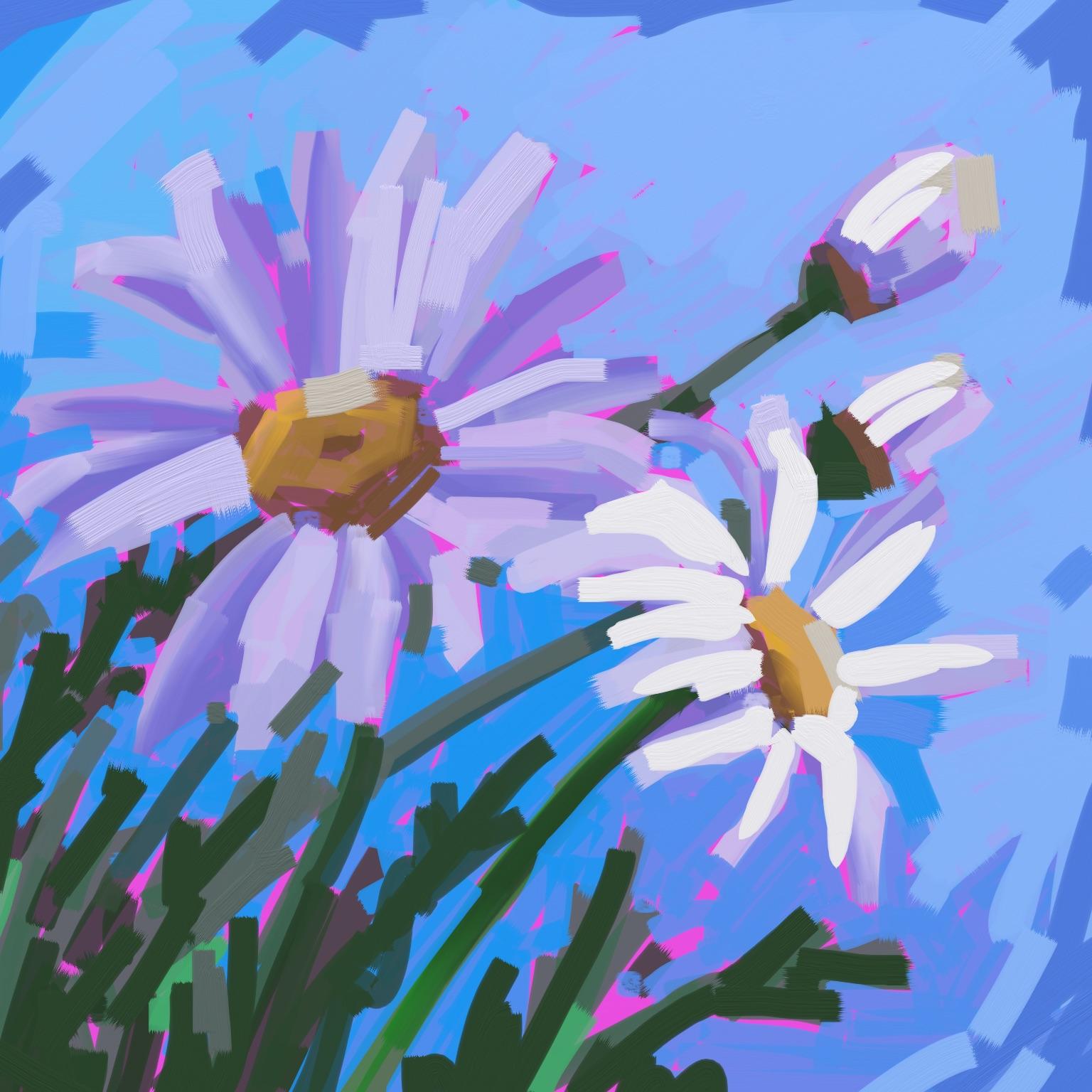 Daisy_1.jpg