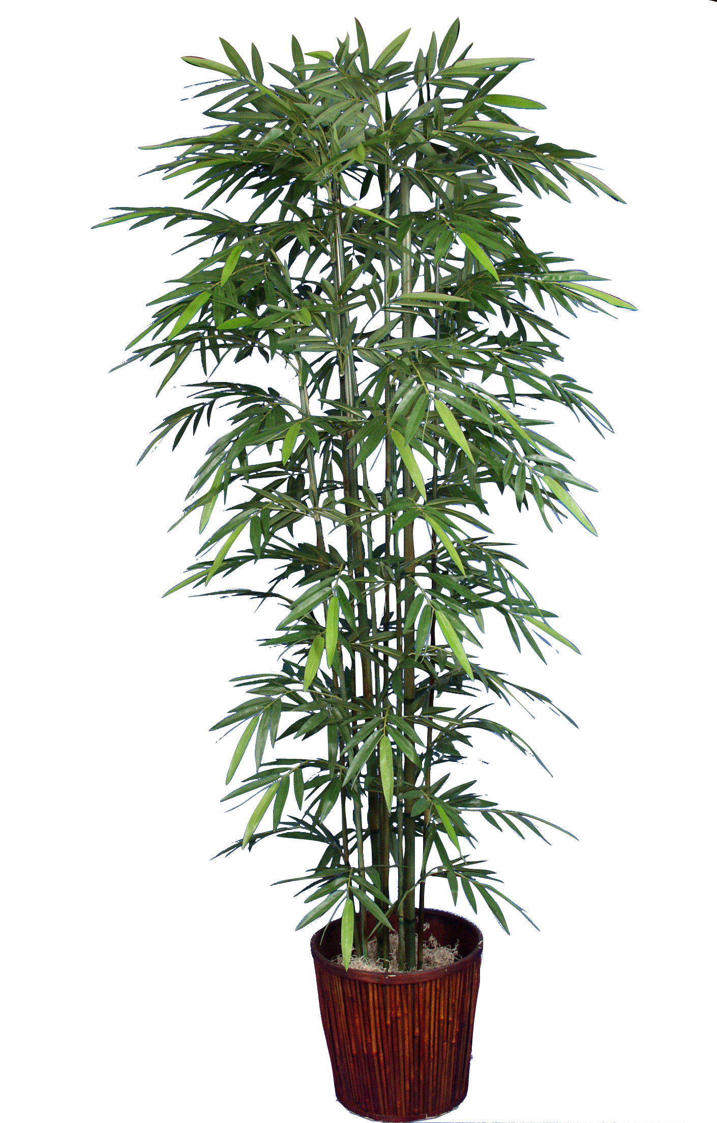 PL365 Bamboo