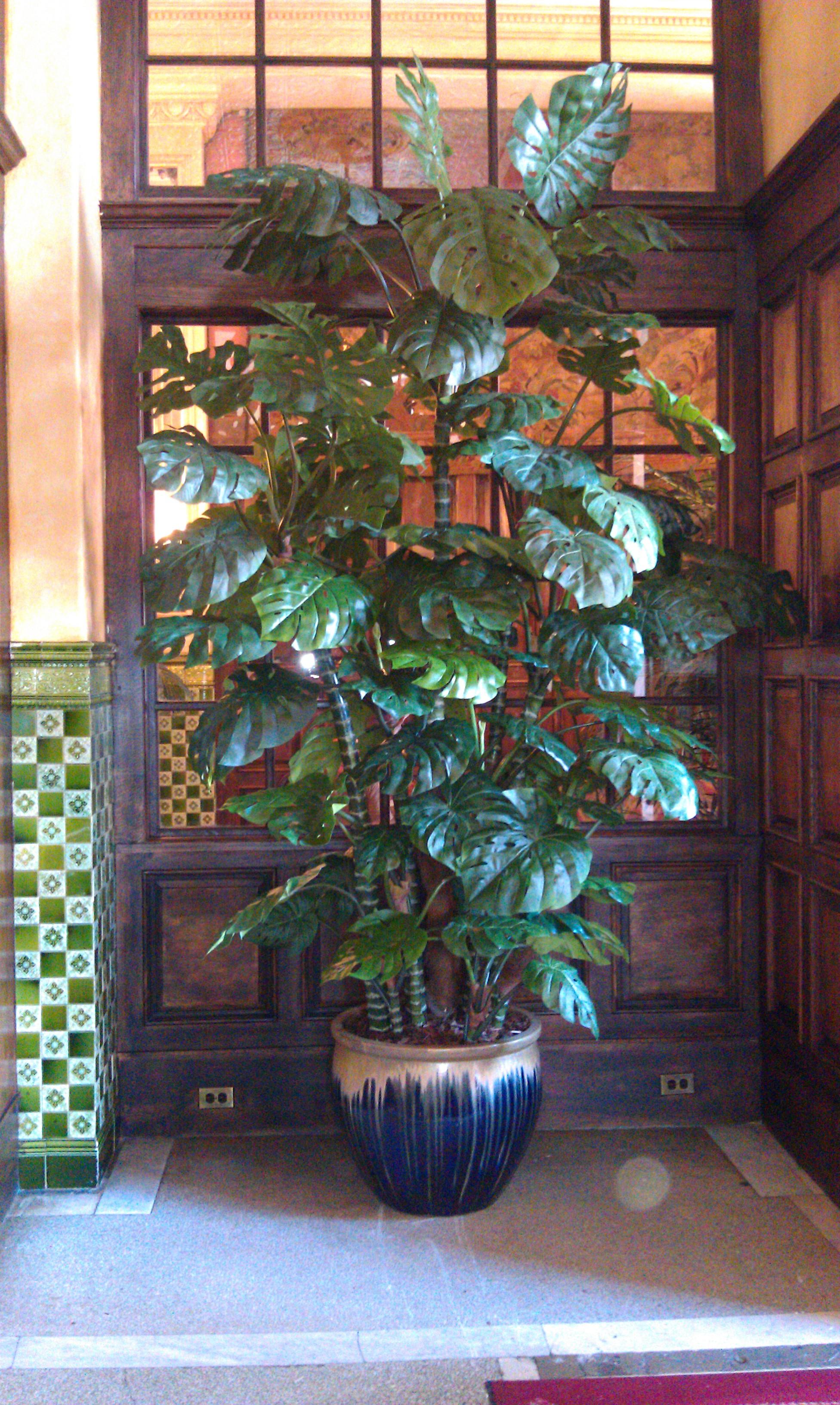 PL521 Monstera Tree