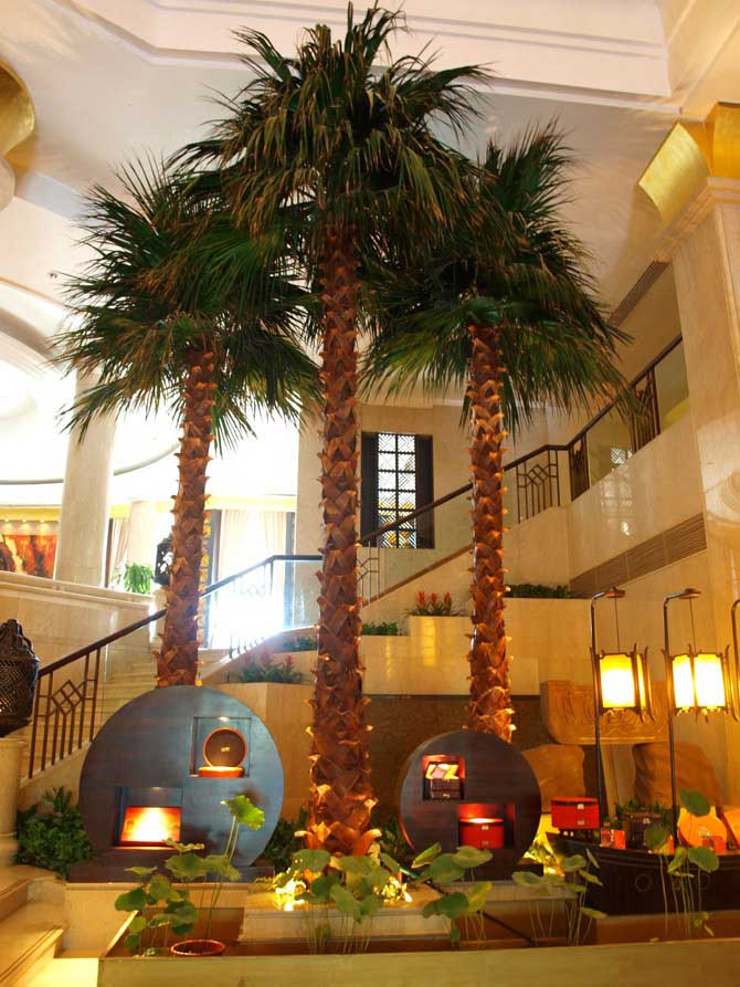 PG333 Washingtonia Palm