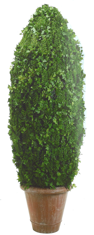 Ivy Cone eliptical