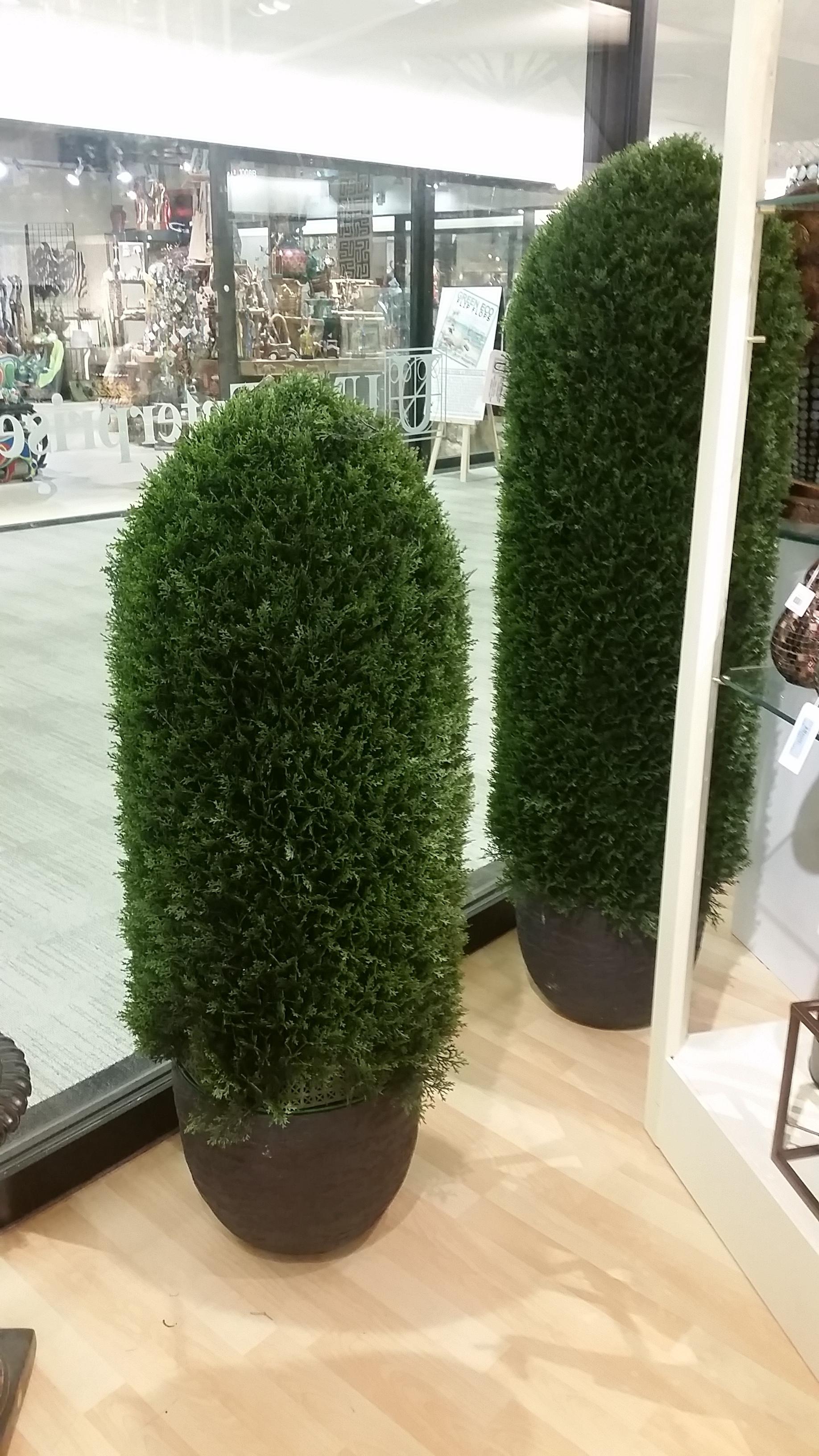 Conical Cedar