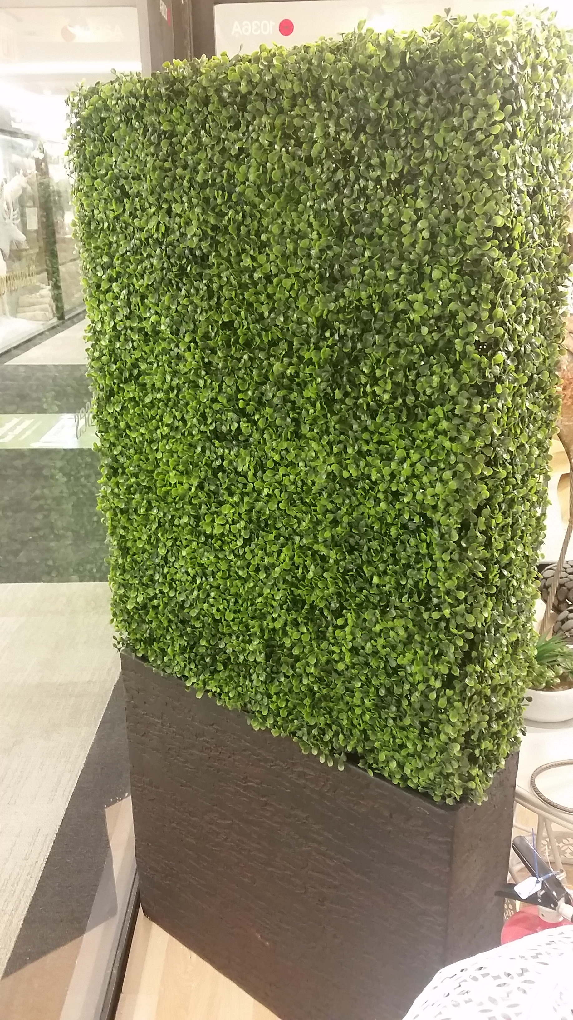 Boxwood Hedge Planter