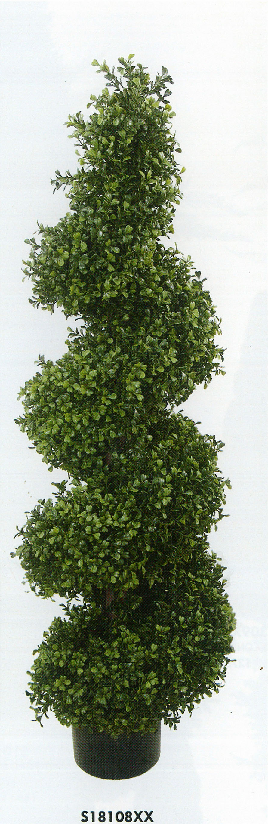 Spiral Boxwood hedge
