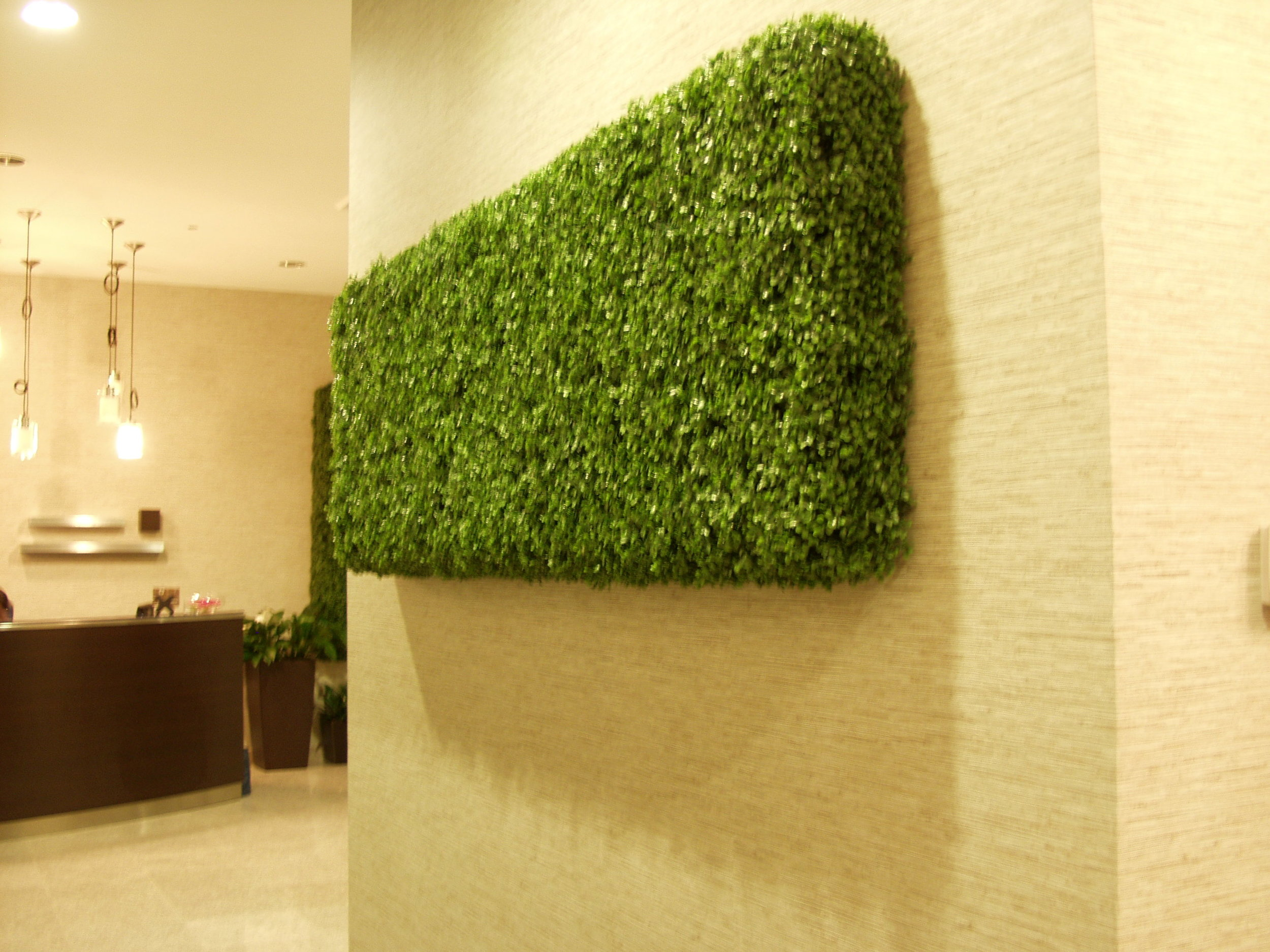 Boxwood Wall Hedge