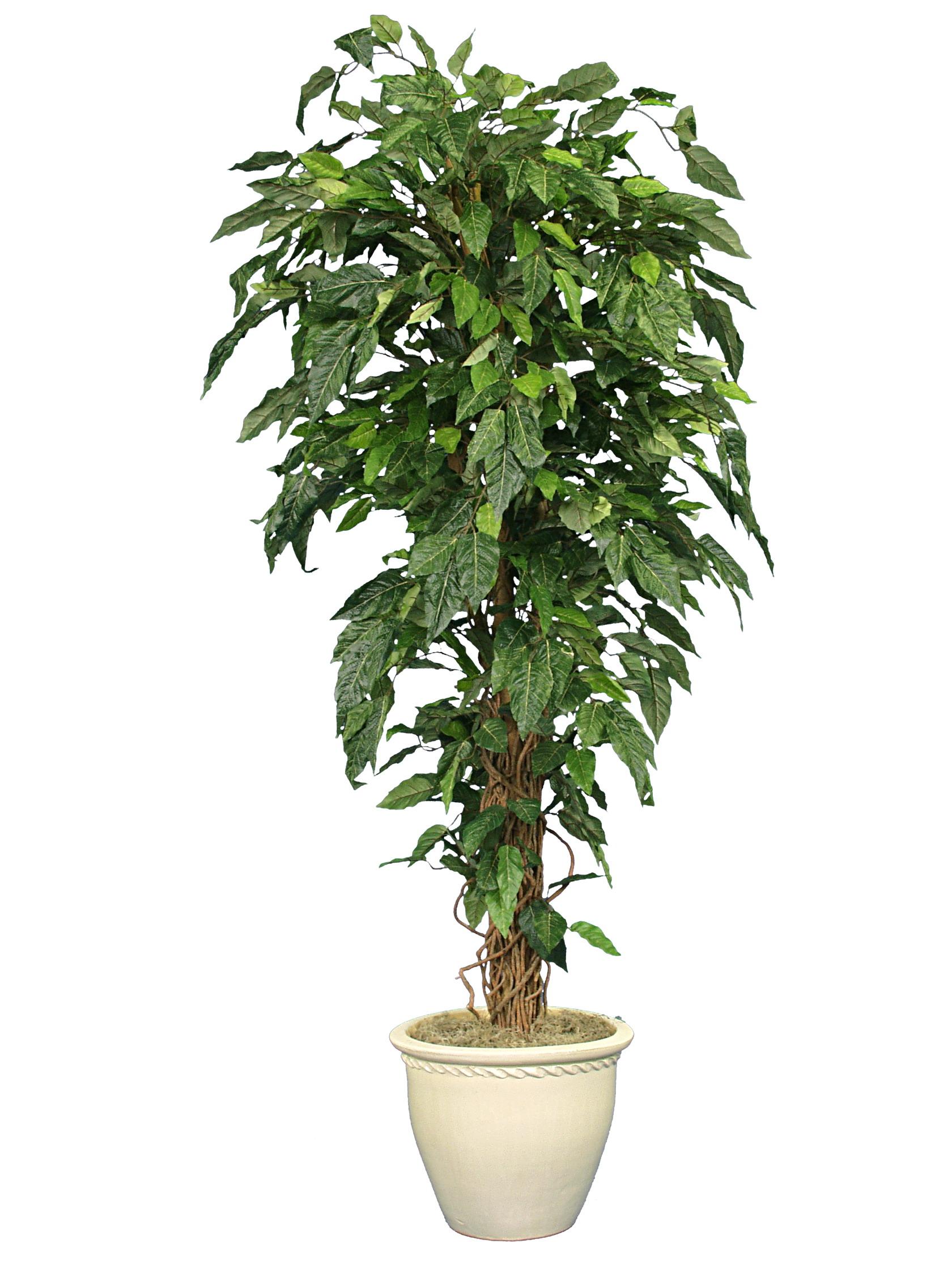 TPT 1257- Alder leaf tree