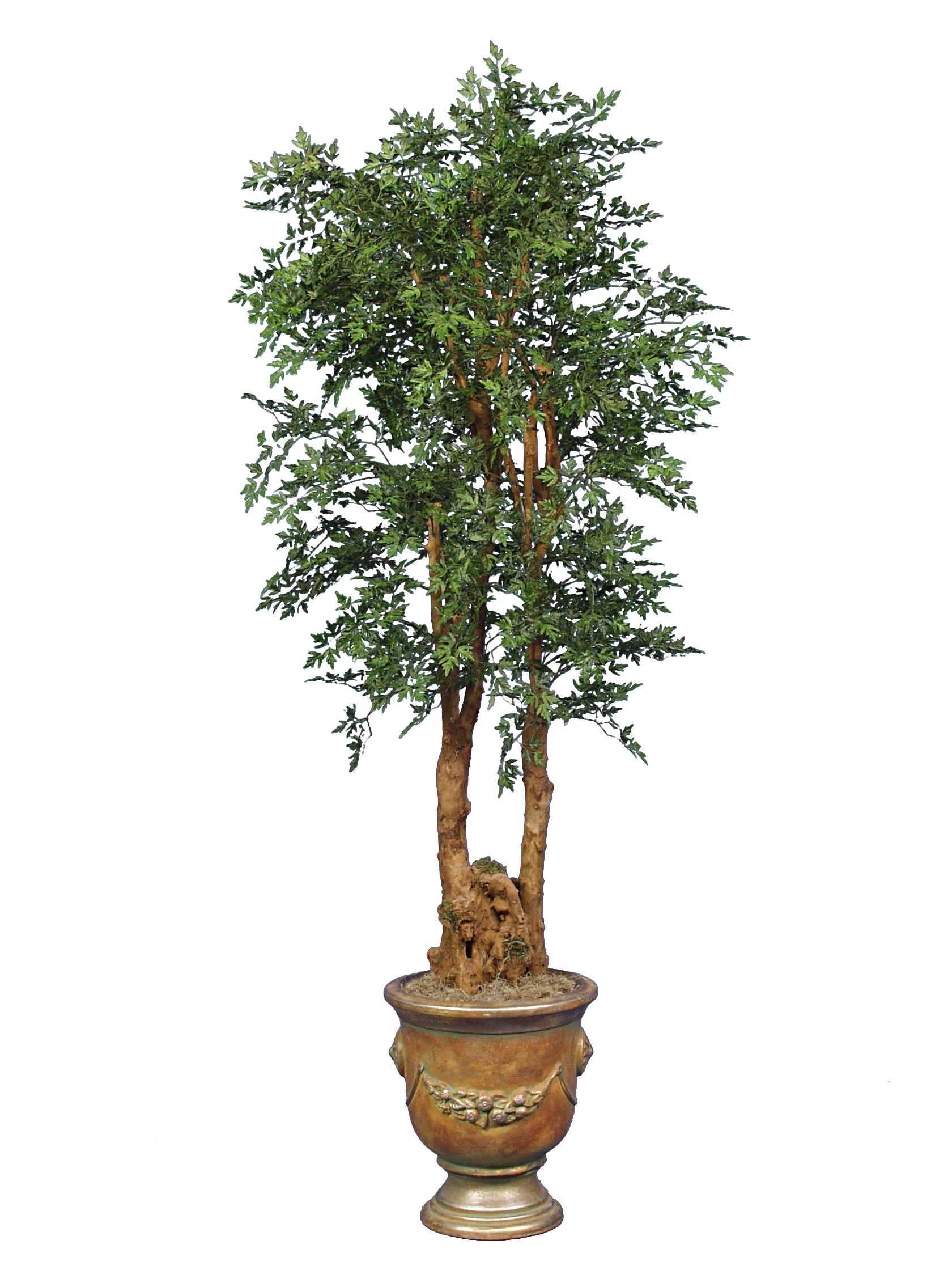 TPT 3424- Aralia Tree