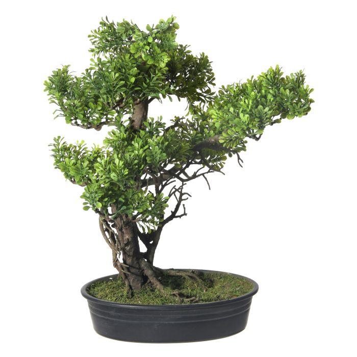 Gallery Of Plants Bonsai Succulents Silk Trees