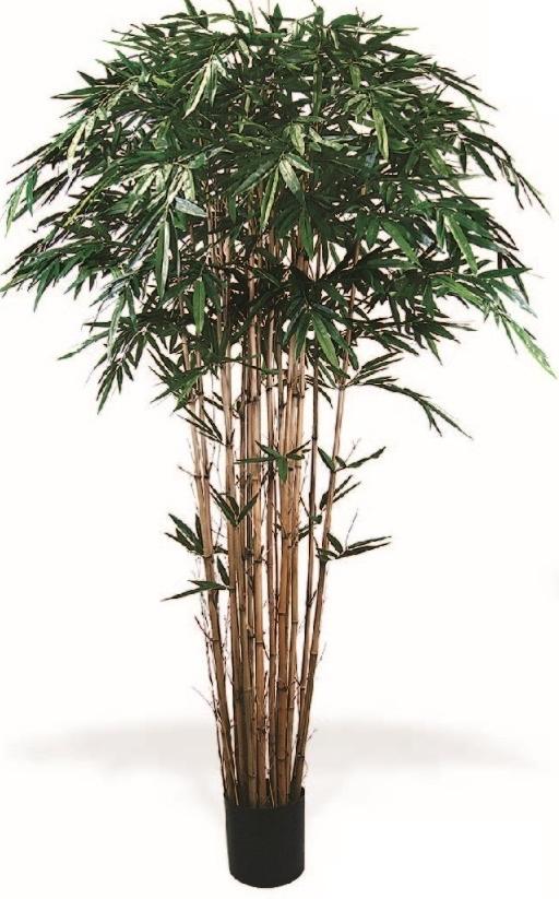 PL366 Bamboo