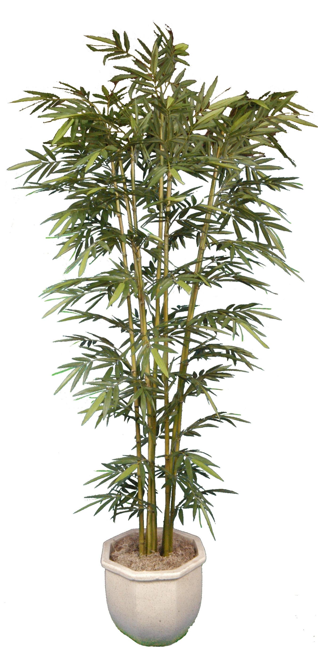 PL417 Bamboo