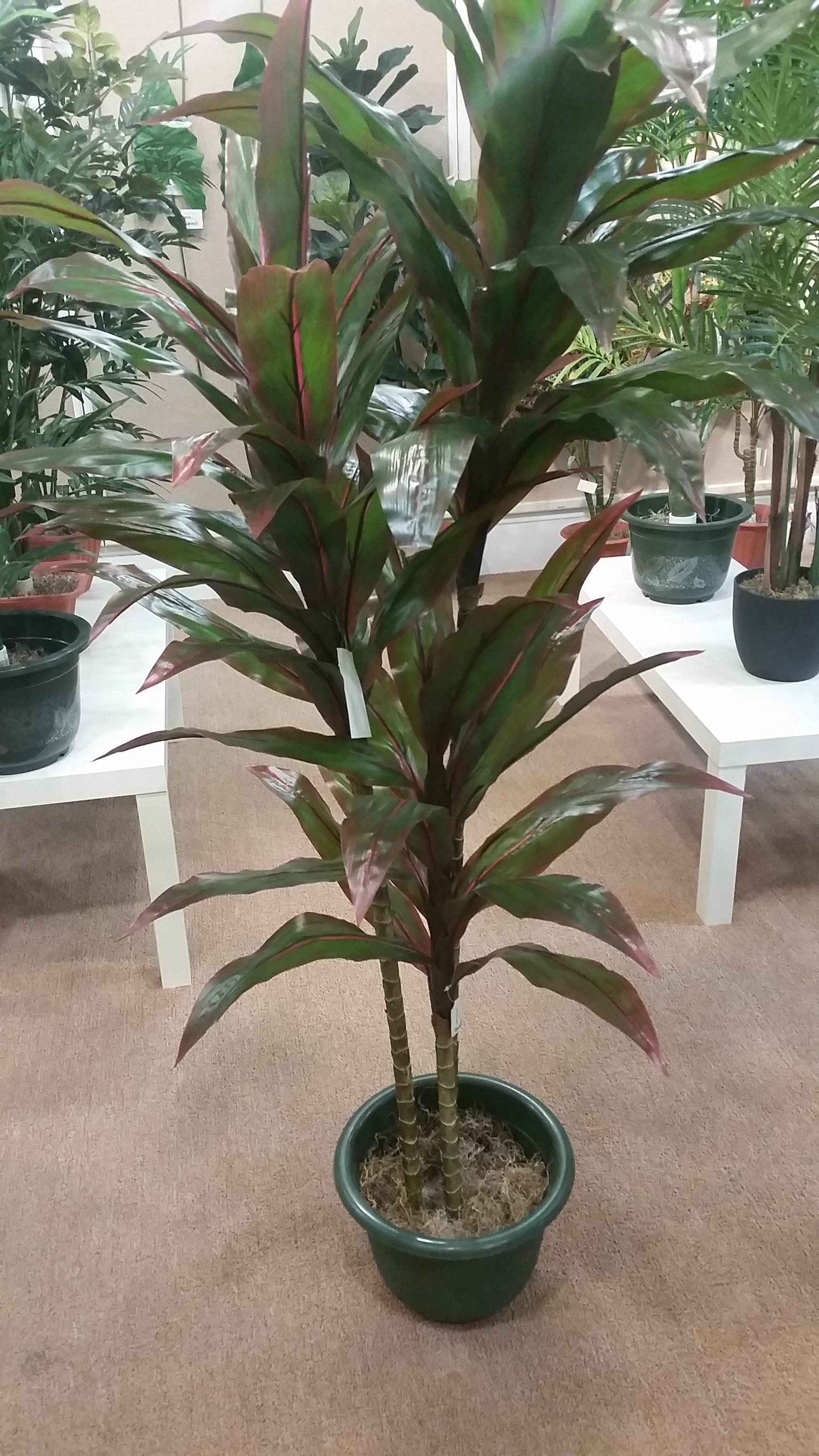 Ty Leaf Plant
