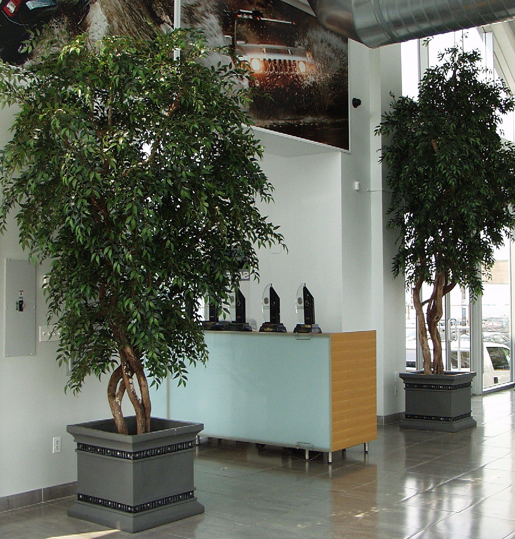Trees from Citi Cad & Hummr.jpg