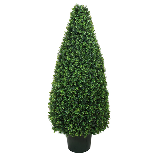 Boxwood Pyramid