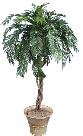 PL077 Cycus Palm