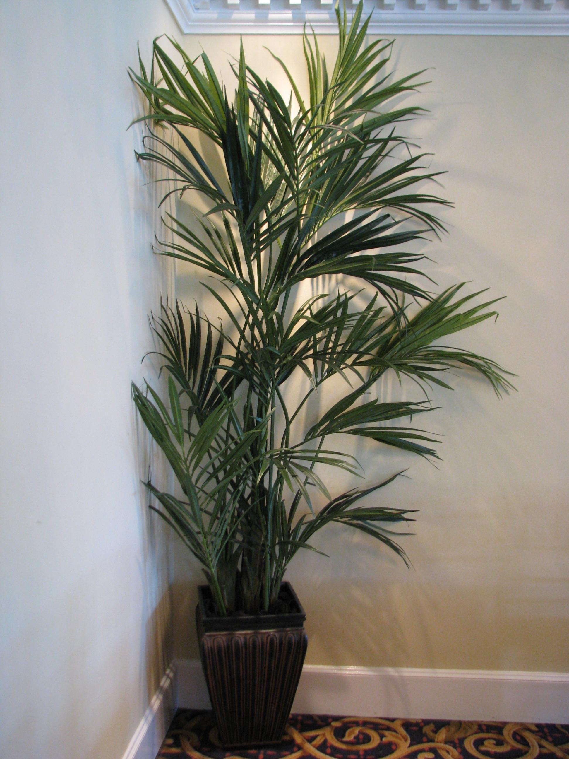 PL280 Kentia Palm