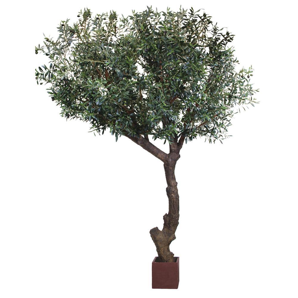 TSP 4143- Olive Tree