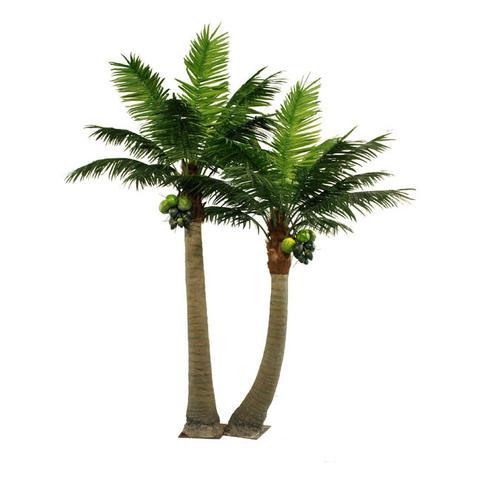 PG501 Coco Palm