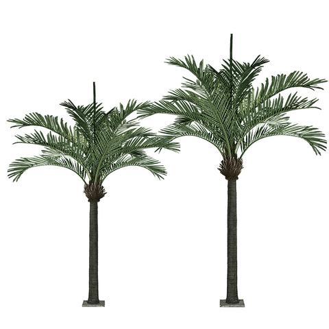 PG504 King Palm