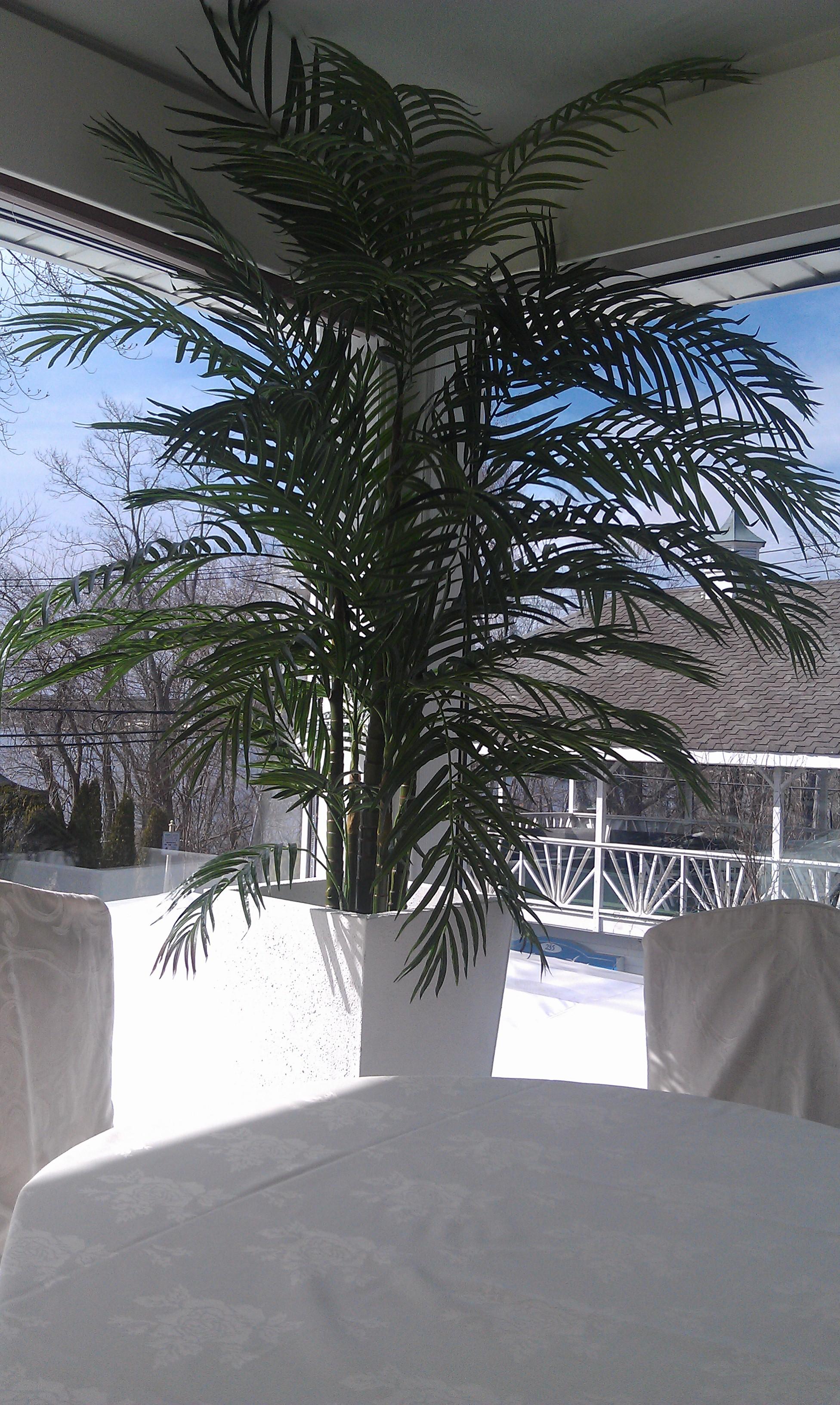 PL399 UV Areca Palm
