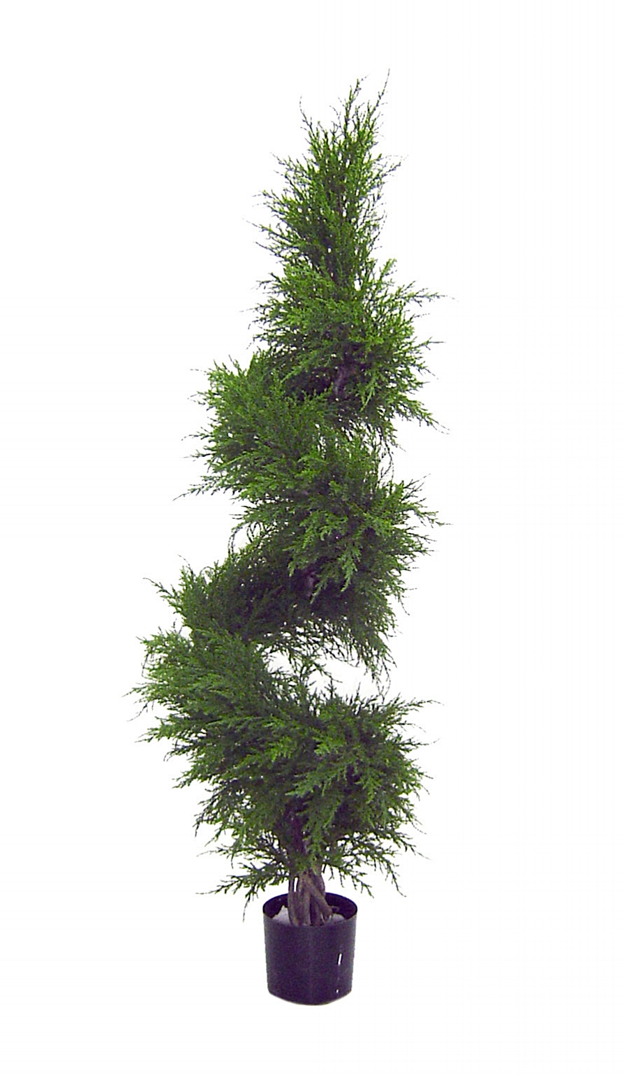 Cypress Spiral