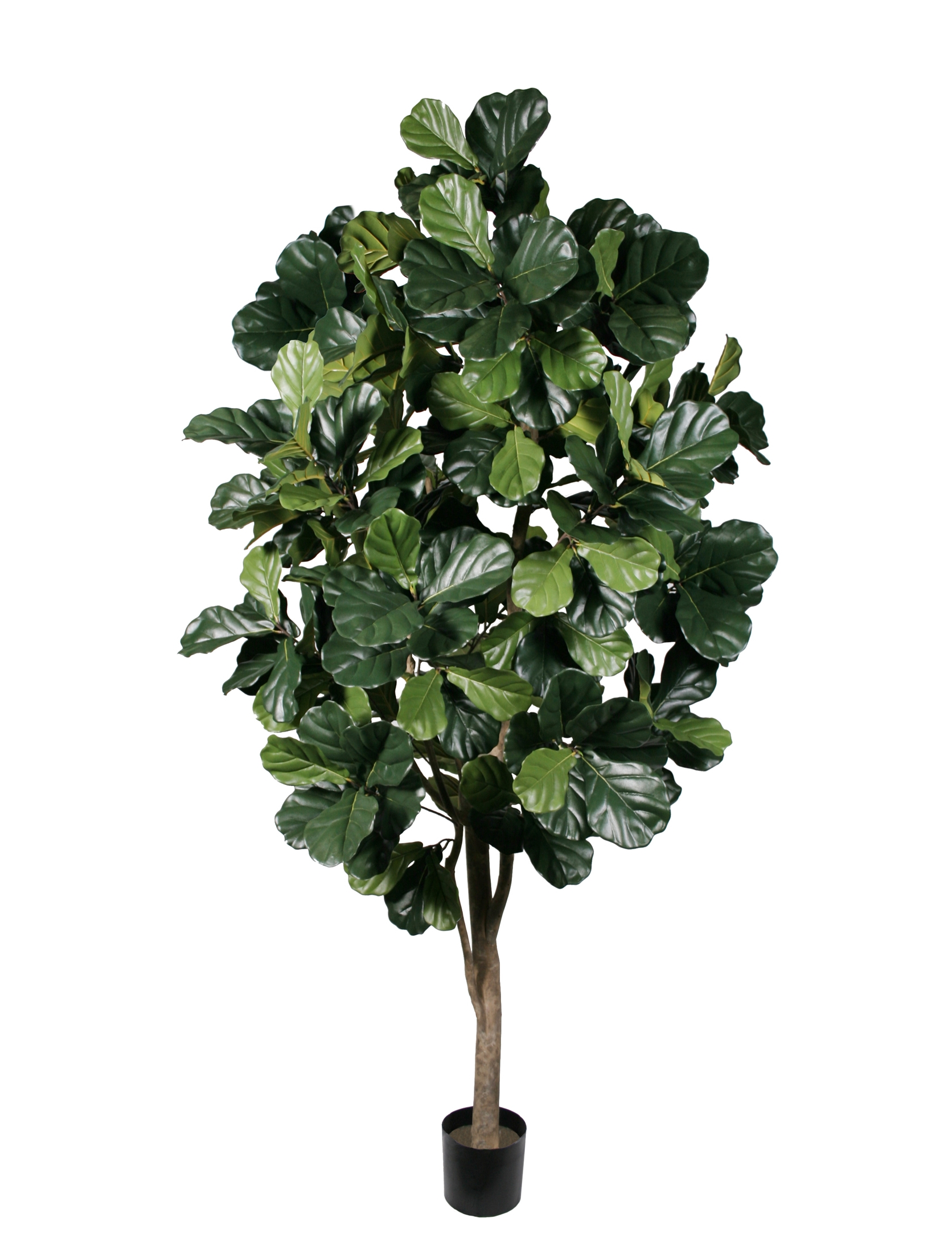 TSP 1679- Fiddle Leaf tree