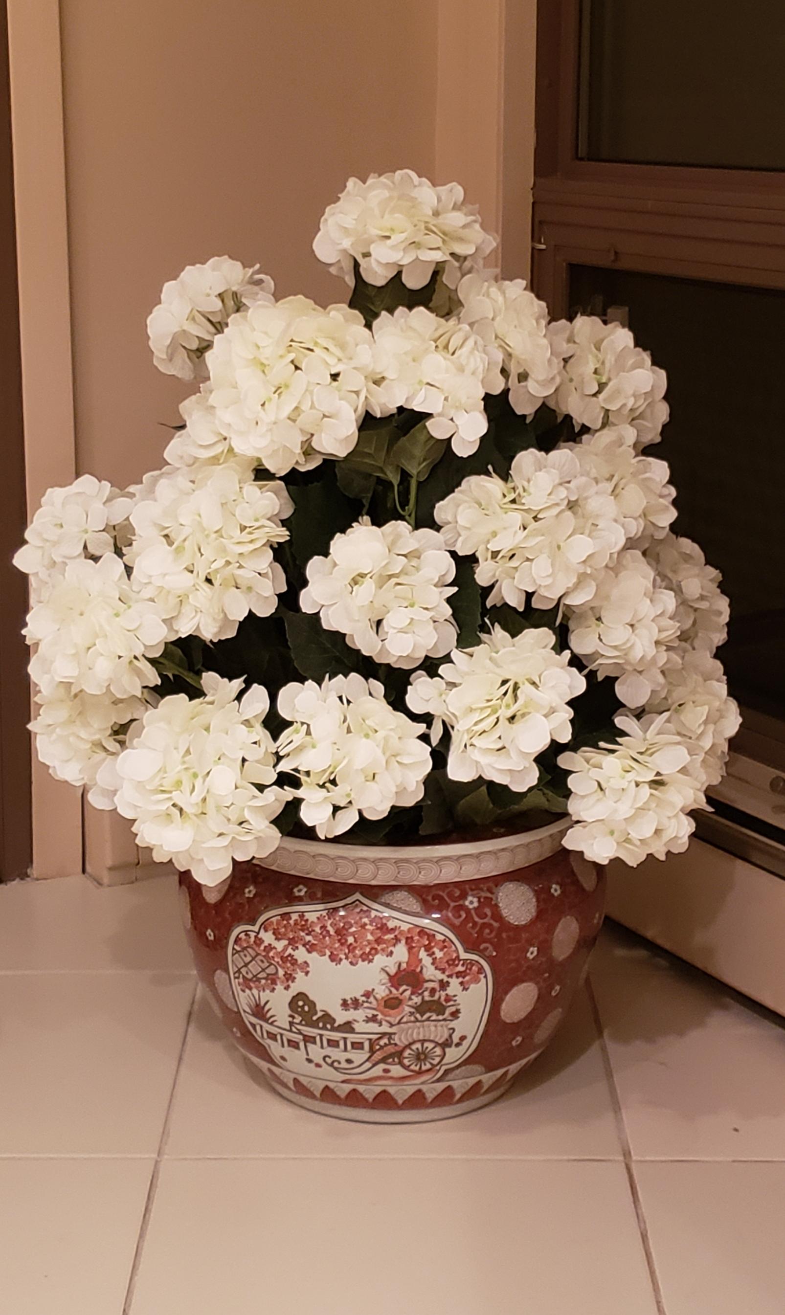 New white Hydrangea
