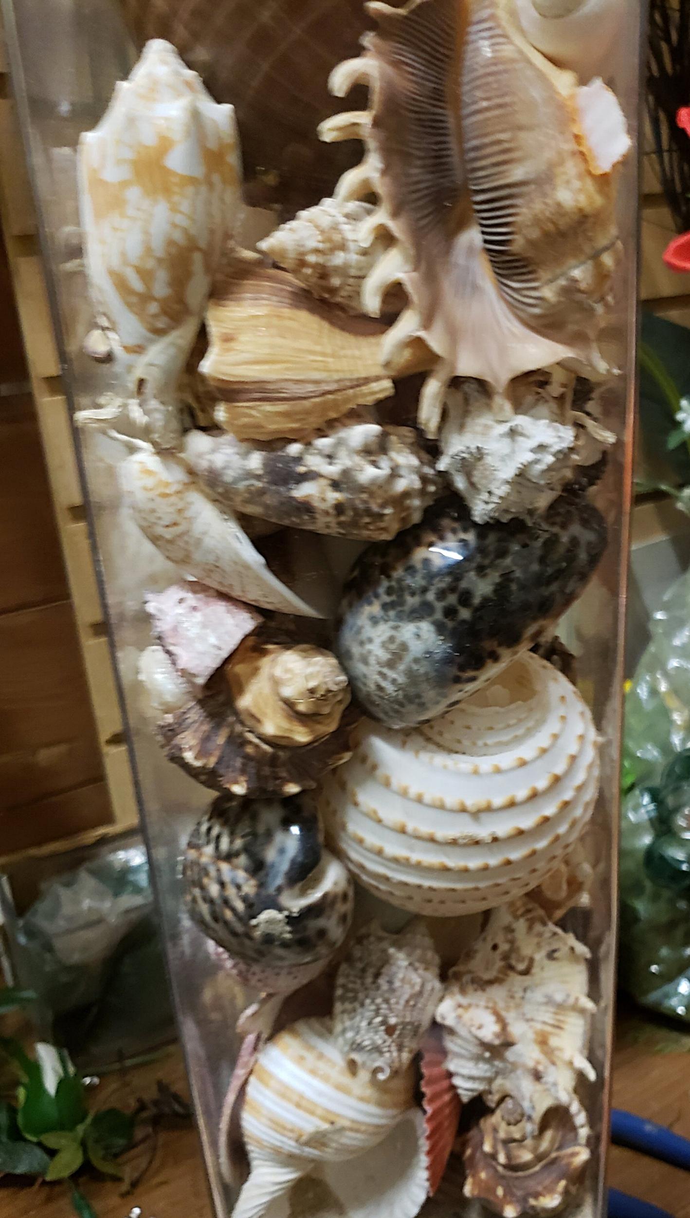 Exotic Shells