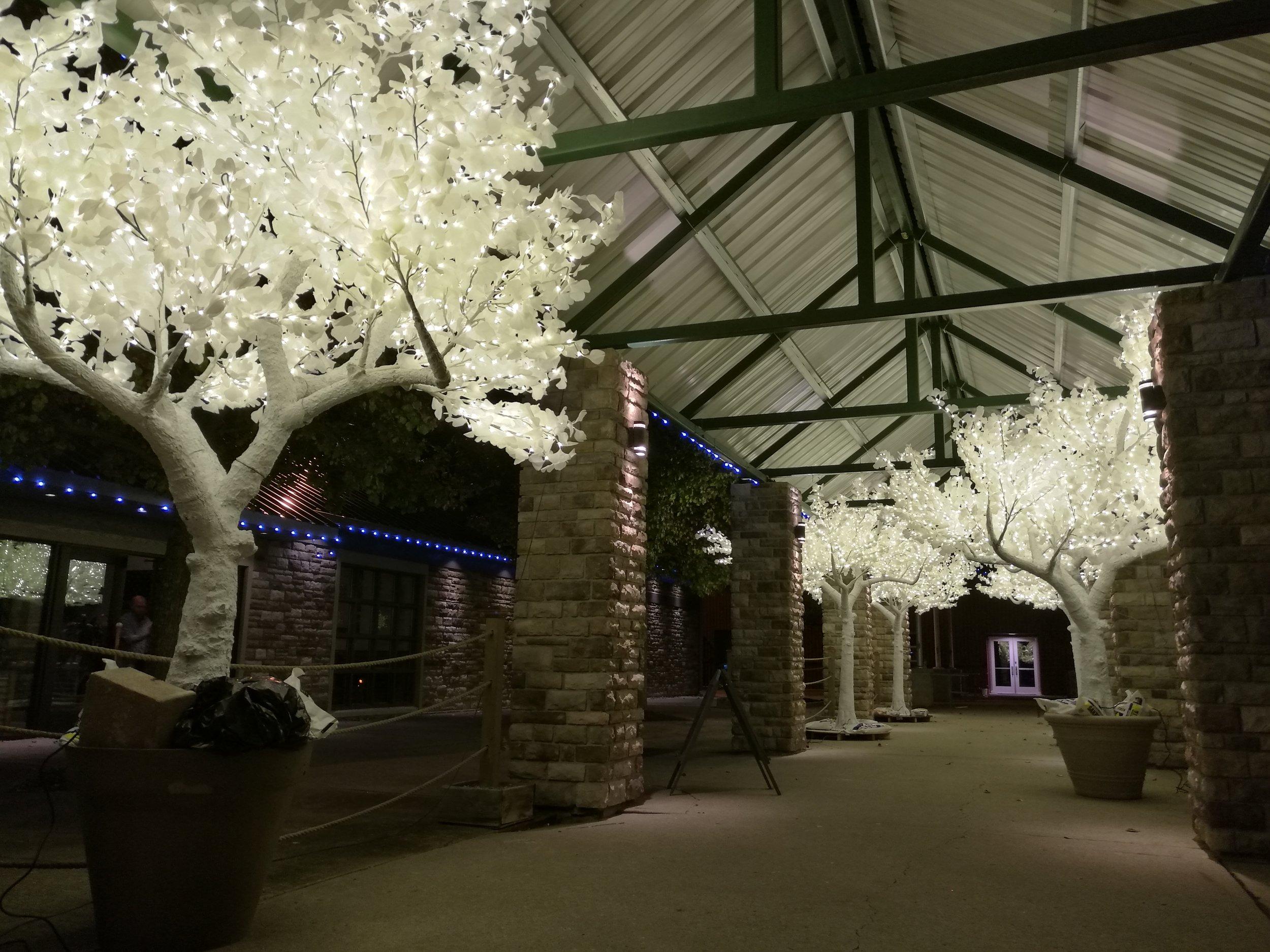 white tree2.jpg