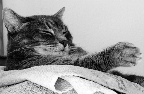 cat sleep.jpg