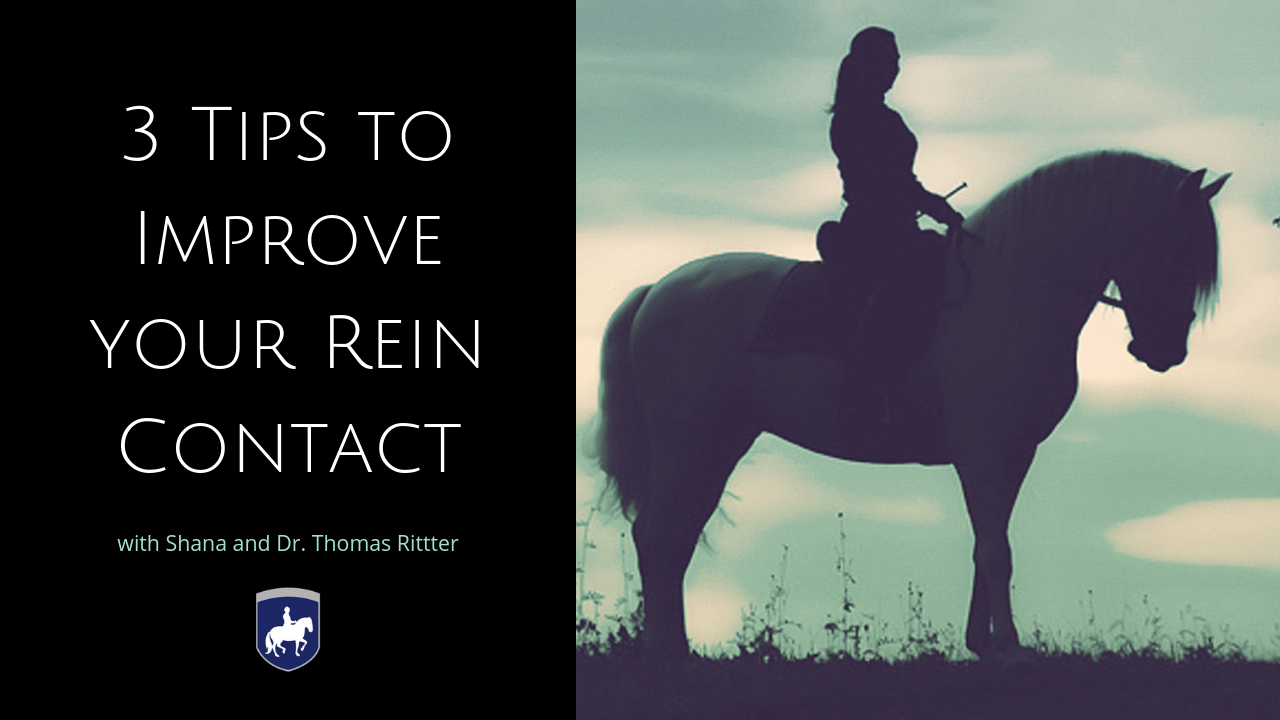 3 Tips to Improve your Rein Contact.png