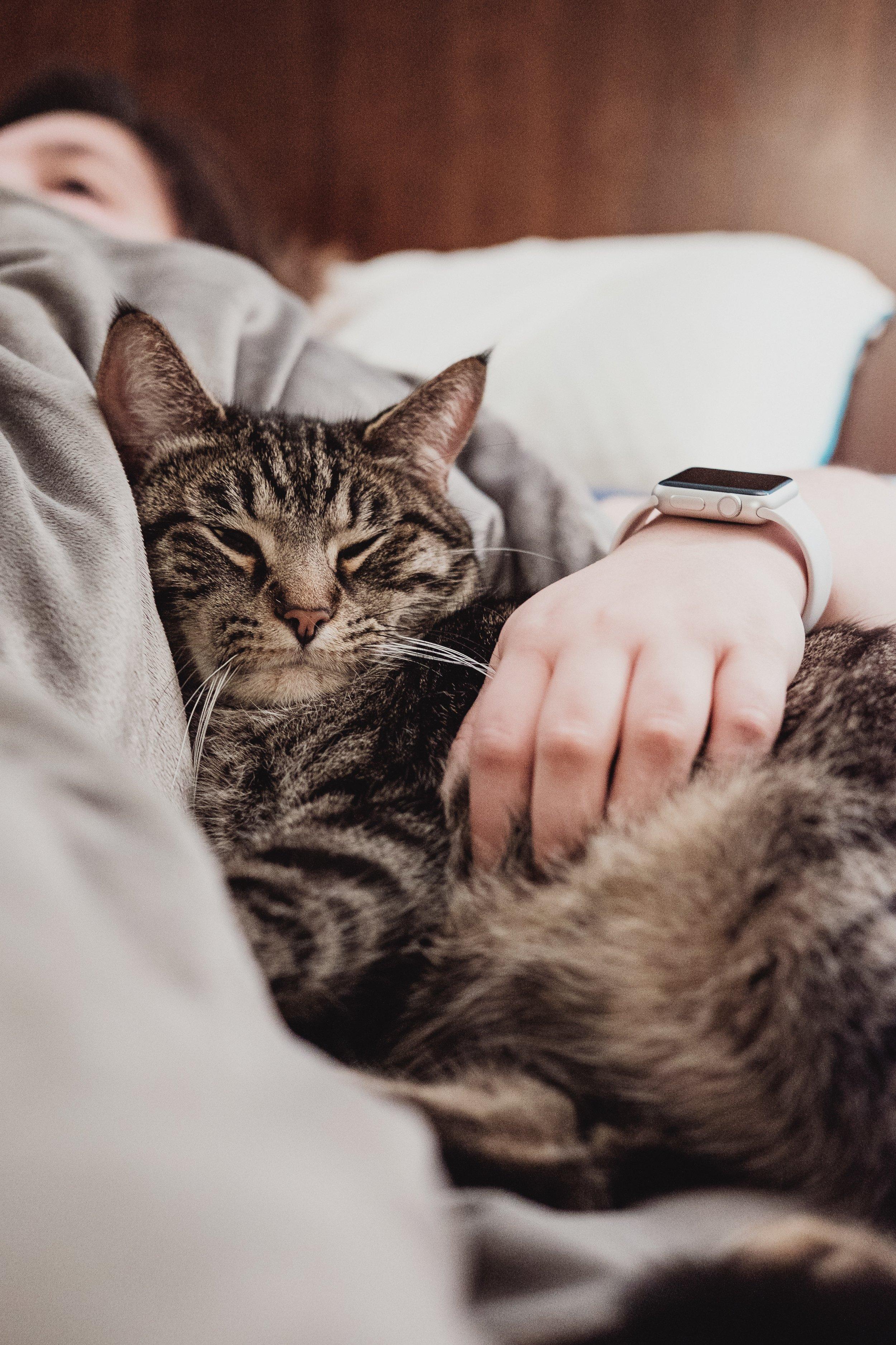 cat sleeping next to woman