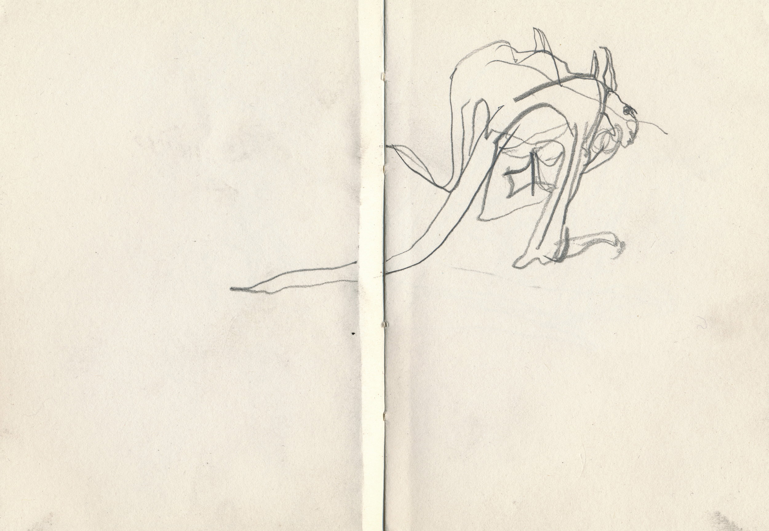 302) Kangaroo drawing 1993, pencil on paper 14x20.5cm.jpg
