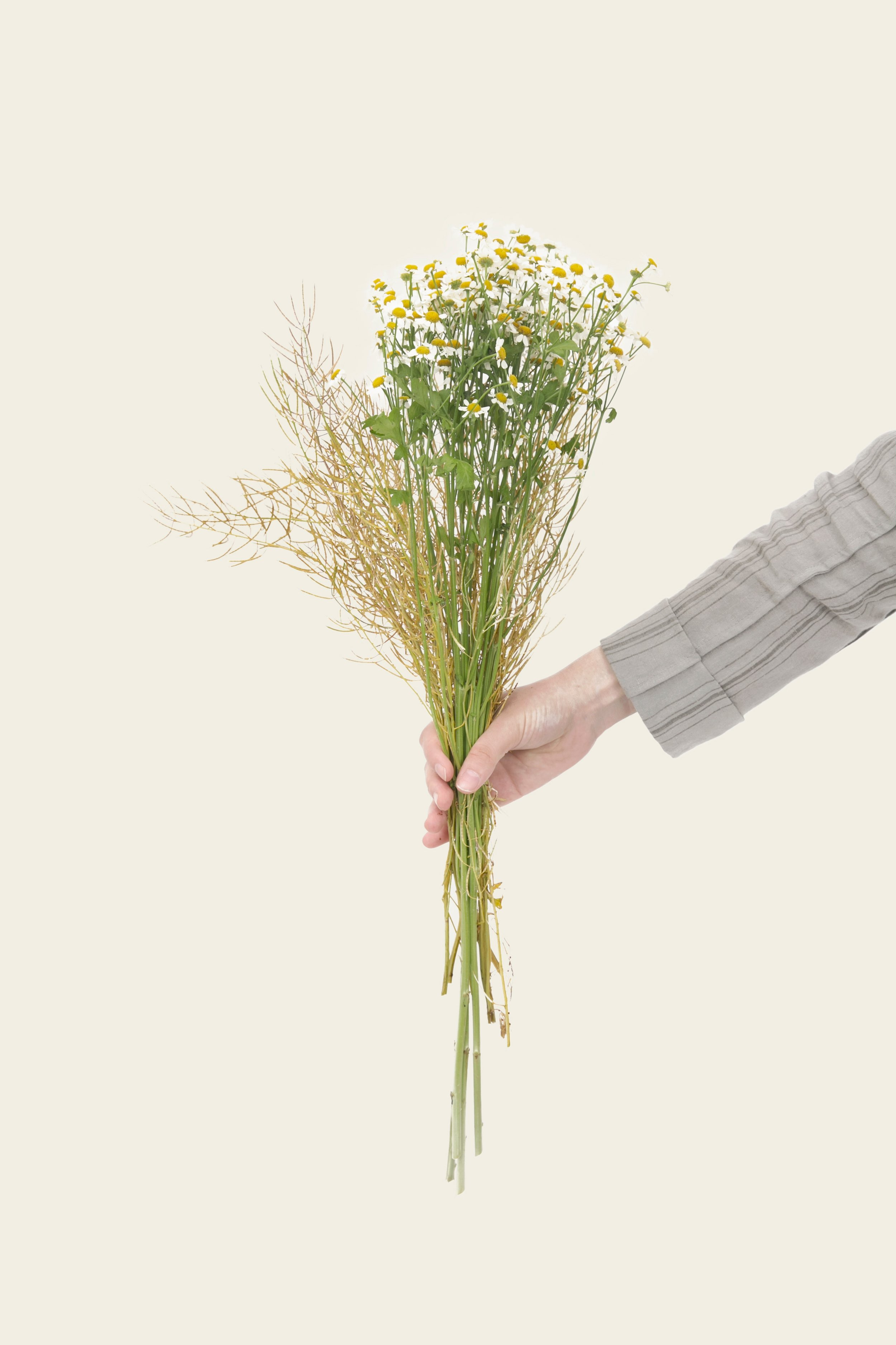 I'm lost for words... - Please accept this virtual bouquet and use the menu above to find your place.