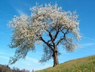 Spring-Renewal-1.jpg
