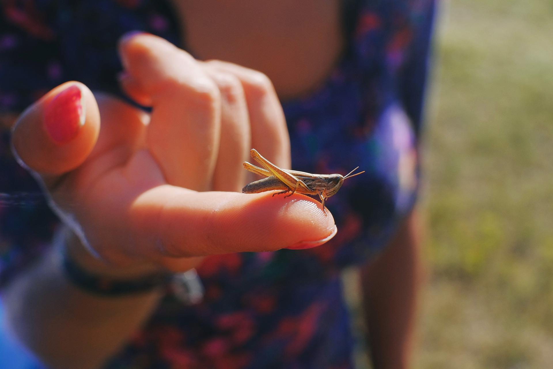 grasshopper-3515086_1920.jpg