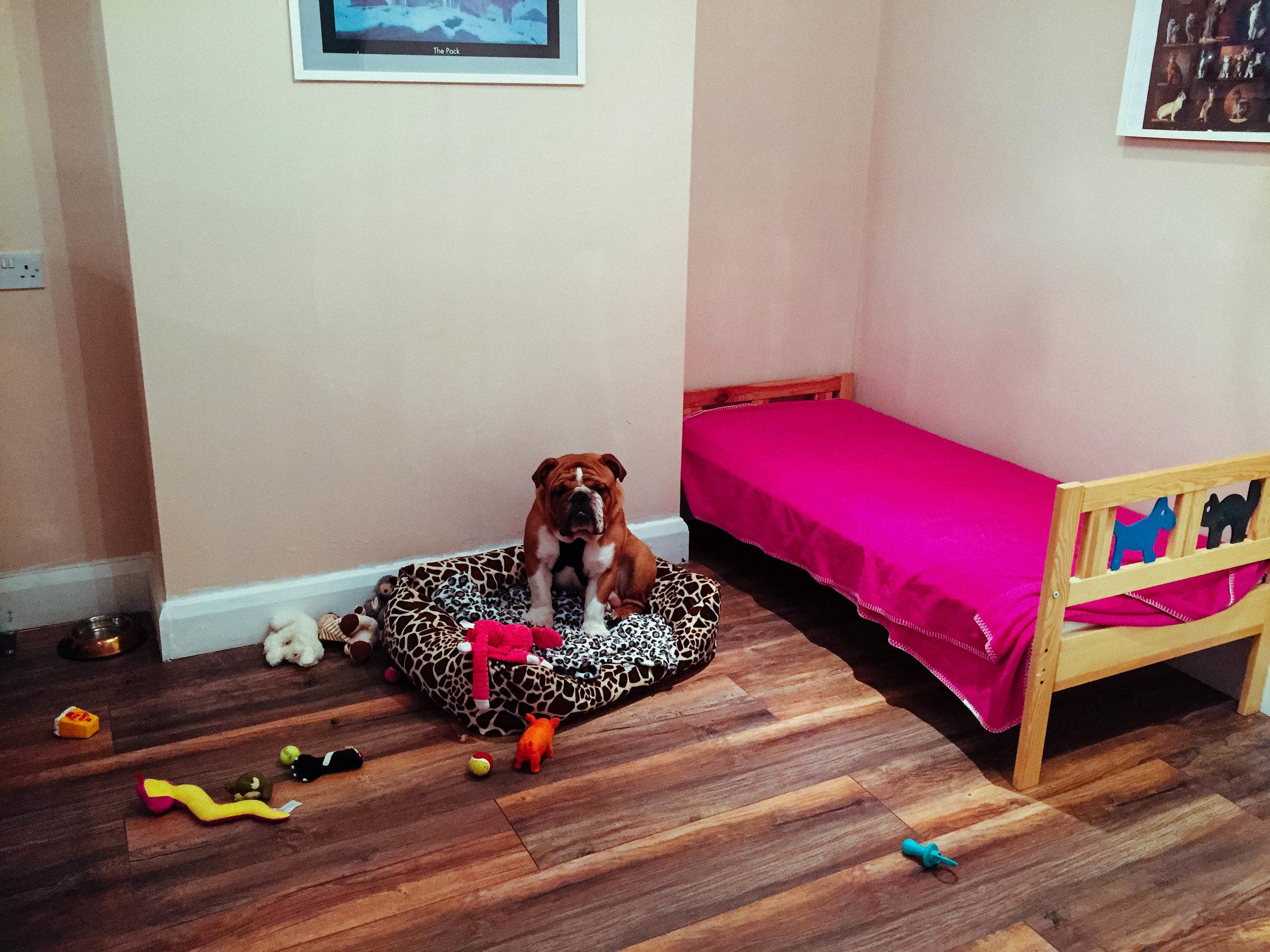 Bulldog Daycare