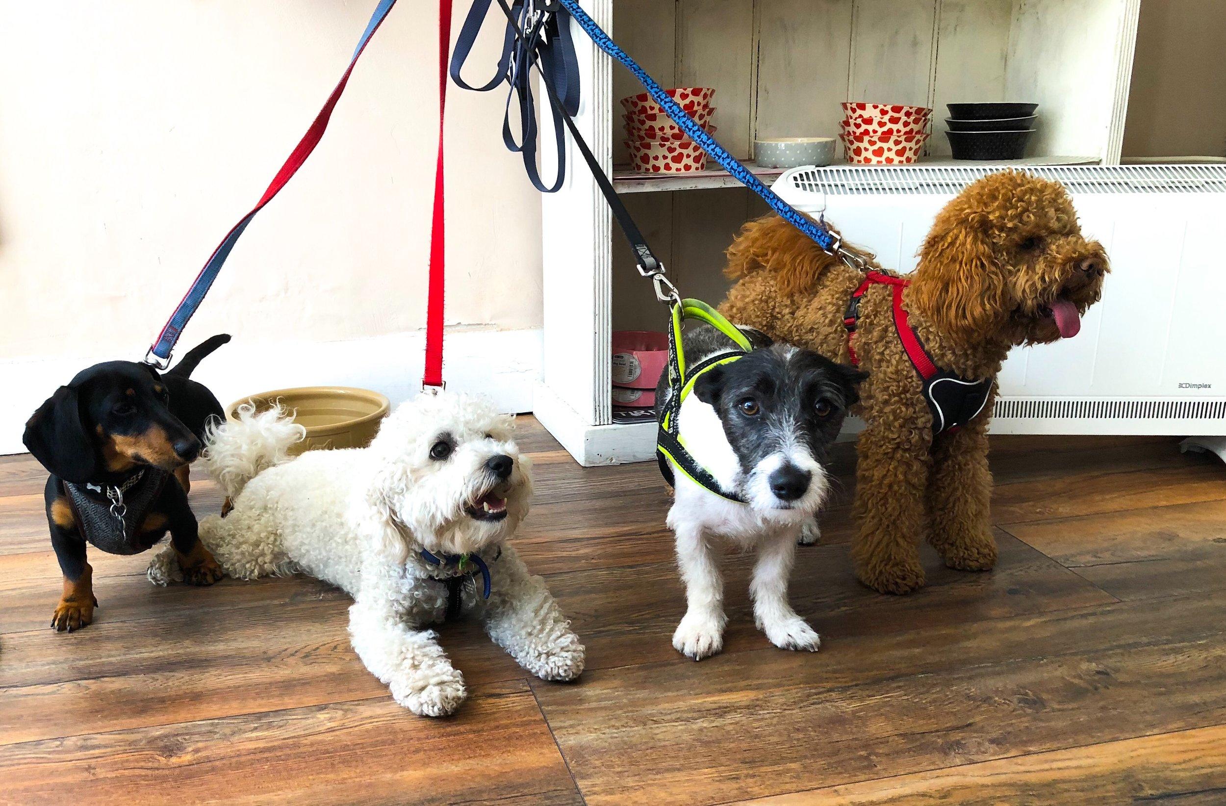 london dog day care