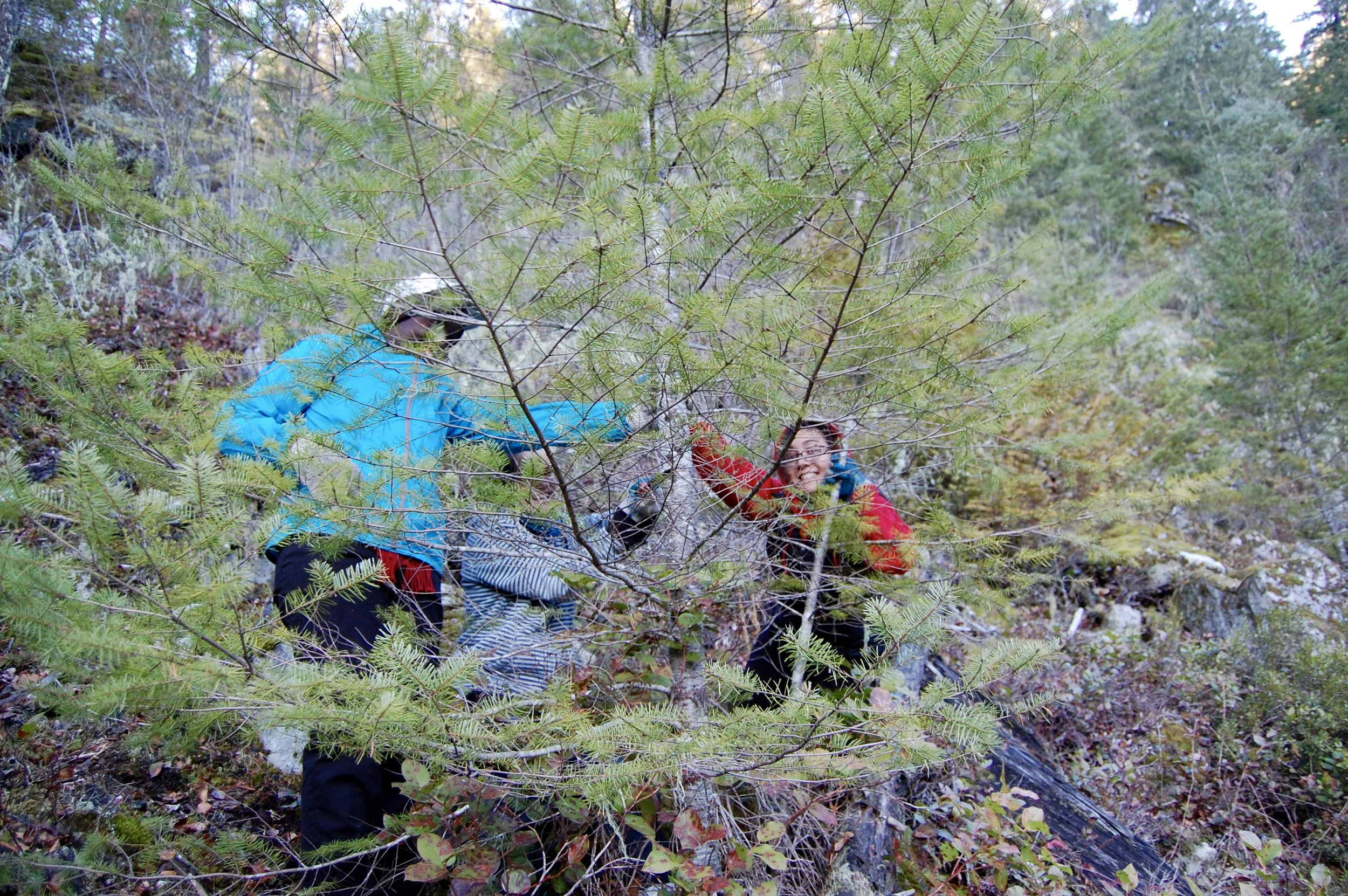 Some of the novitiate bundled up warmly and went bushwacking on the upper reaches of our grounds to procure a Christmas tree for our community room.