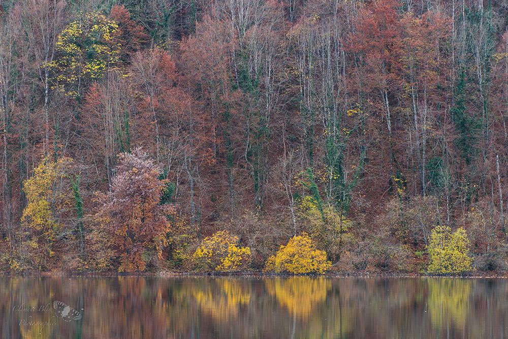 Reflets d'automne au bord du lac, Jura.