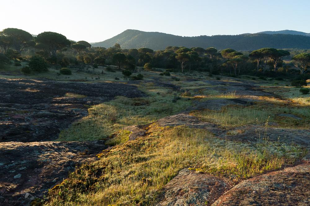 Paysage aride et rocheux de la plaine des Maures