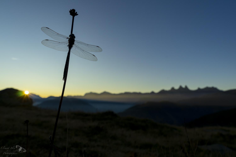 La grande libellule face aux aiguilles d'Arves. Sony Alpha 7, 24-70 G Master, 24mm,1/320 sec, F8, 200 isos.