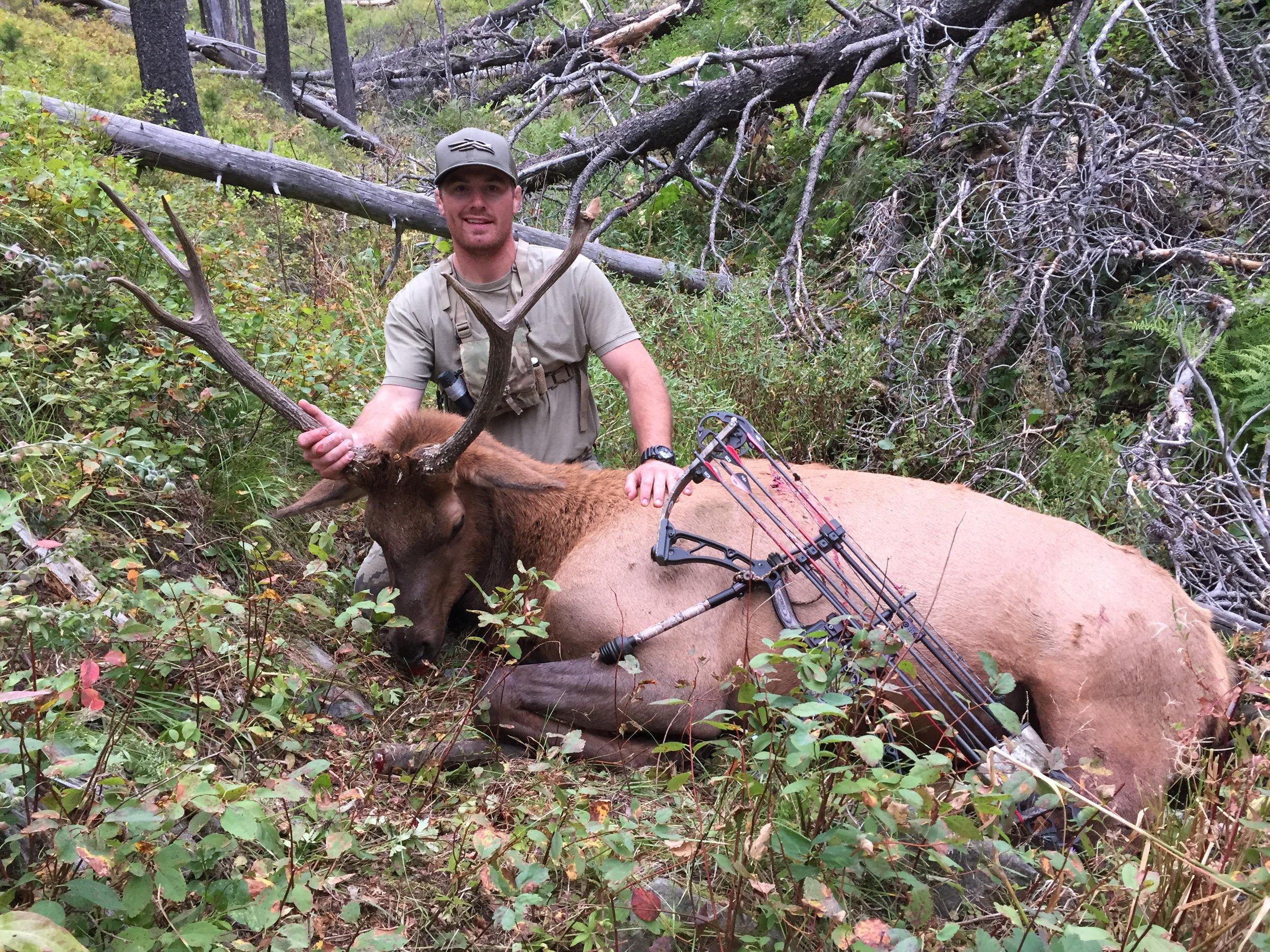 Montana Elk Levi Morgan