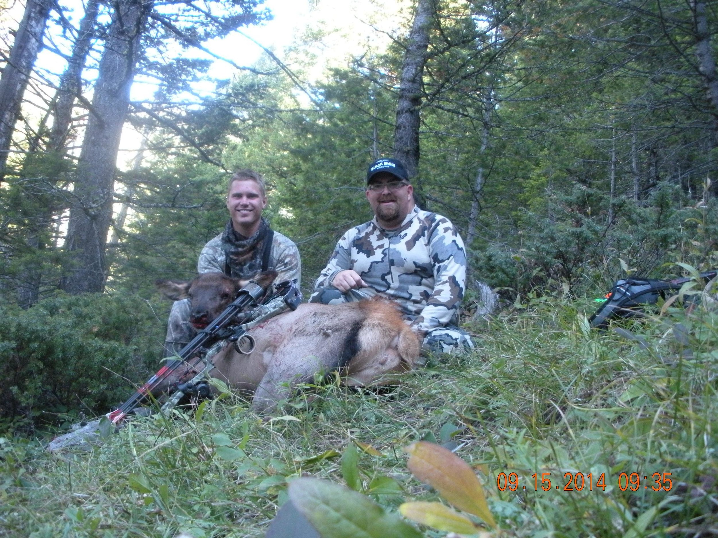 Montana Elk Colton Pointer