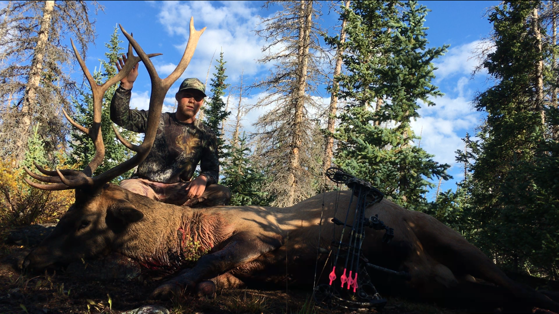 Montana Elk Chase Burns