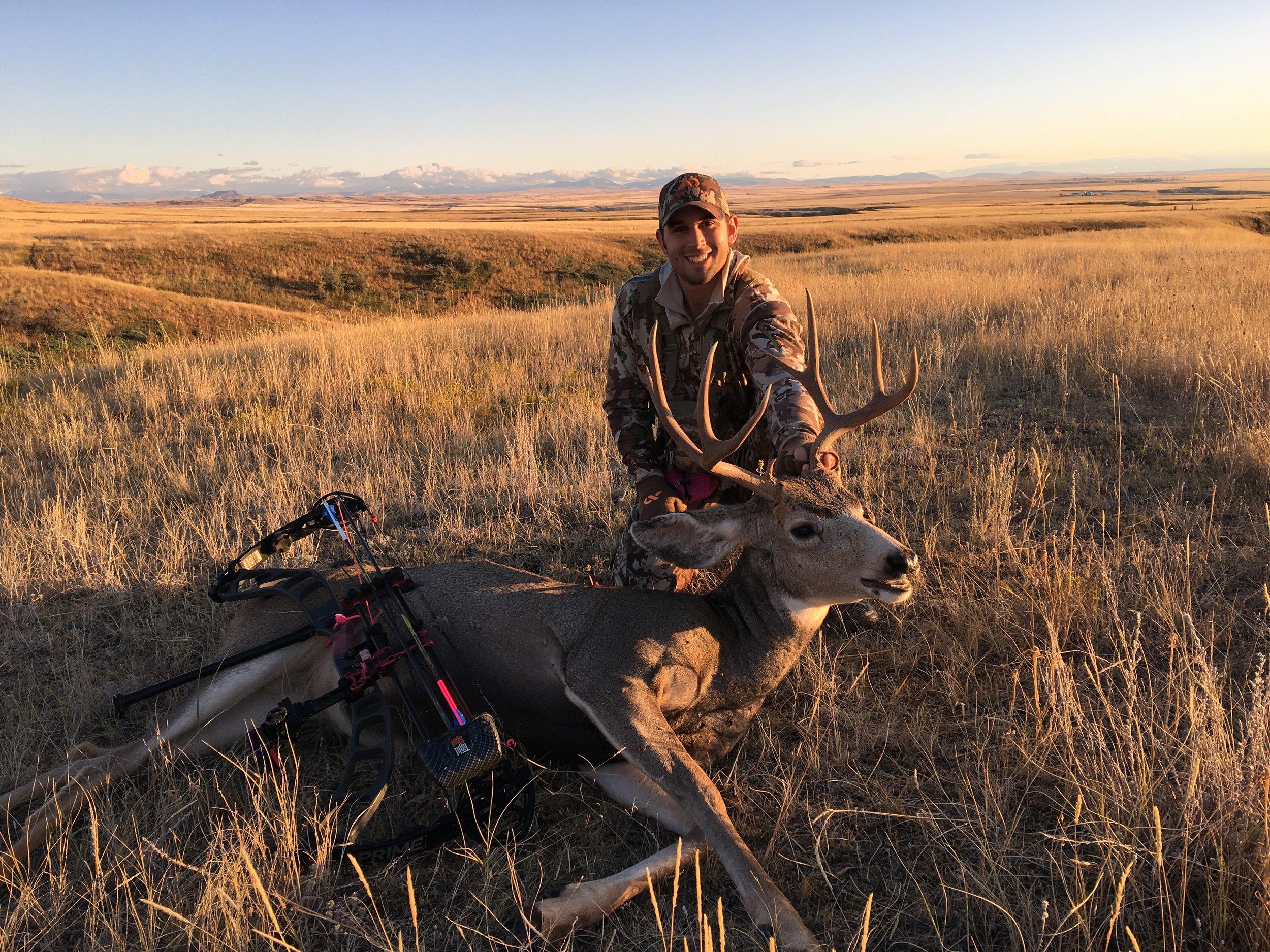 Montana Mule Deer Cliff Nicholson